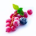 Assortment of chilled berries Stock Images
