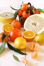 Assortment of Citrus plants Royalty Free Stock Photo