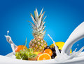 Assortment of exotic fruits sweet on white background Royalty Free Stock Photos