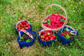 Assortment of freshly picked friut in baskets on a grass Royalty Free Stock Photo