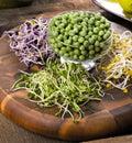 Assortment of micro greens. Growing kale, alfalfa, sunflower, ar