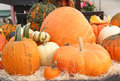 Assortment of pumpkins gourds and squash with warts an that have many Stock Image