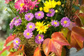 Aster and autumn leaves Stock Images
