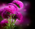 Photo : Aster Flowers Art Design on vector squares