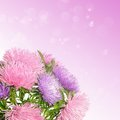 Aster flowers autumn boquet on the colorful bokeh background Stock Photography