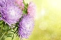 Aster flowers autumn bouquet on the colorful golden grunge fiber background Royalty Free Stock Photo