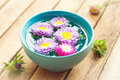 Aster flowers in bowl with water Royalty Free Stock Photo