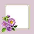 Aster flowers composition and frame on lilac background Royalty Free Stock Image