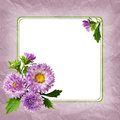 Aster flowers composition and frame on lilac background Stock Photos