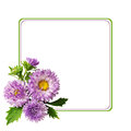 Aster flowers composition and frame on white background Stock Images