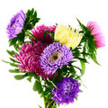 Asters Royalty Free Stock Image