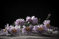 Asters on a black background Royalty Free Stock Photography