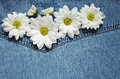 Asters on denim fabric white blue Royalty Free Stock Image
