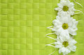 Asters line on green background checkered Stock Photography