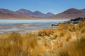Atacama Desert Royalty Free Stock Photo
