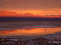 Atacama`s sunset - lonely flamingo Stock Images