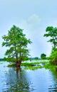 Atchafalaya River Royalty Free Stock Photo