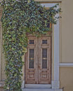 Athens greece house entrance and ivy plant wooden door Stock Photos