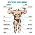 Athletic body man figure muscular anatomy