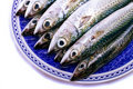 Atlantic mackerel Stock Photos