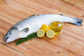 Atlantic Salmon fish Stock Photography