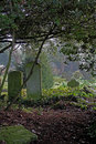 Atmospheric view of churchyard with gravestone and derelict vegetation Royalty Free Stock Image
