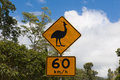Attention cassowaries sign speeding has killed seen in the north of australien white mountains the are critically endangerd Stock Photo