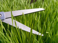 Attention to Detail - Cutting Grass Royalty Free Stock Photo