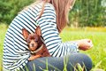 Attentive eyes of small toy-terrier dog. Girl holding dog. Royalty Free Stock Photo