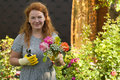 Attractive adult woman gardener grows flowers roses in country house Royalty Free Stock Image