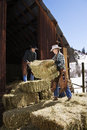 Attractive Couple Moving Hay Bales Stock Photography
