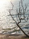 An Attractive Leafless Tree with its Branches against Brighr Sunlight with Blue Ocean Water - Abstract Silhouette