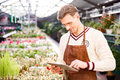 Attractive man gardener standing and using tablet in brown apron glasses in greenhouse Stock Image