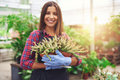 Attractive nursery owner in her greenhouse successful holding a potted plant hands as she gives the camera a friendly smile Royalty Free Stock Images
