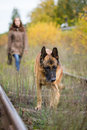 Attractive young woman walking with her dog German shepherd at autumn forest, near rail way - pet is in focus Royalty Free Stock Photo