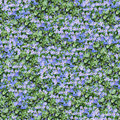 Aubrieta and violet seamless composable pattern Stock Photos