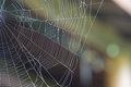 August spiderweb a caught in early Royalty Free Stock Photo