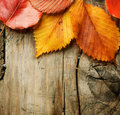 Aunumn Leaves over wood background Royalty Free Stock Photography