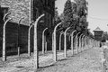 Auschwitz Fence Royalty Free Stock Photo