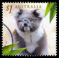 Australia koala postage stamp Royalty Free Stock Images