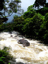 Australia, Queensland. Daintree national park. Mountain river and Rainforest Stock Photography