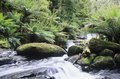 Australia queensland stream in rainforest Stock Photo