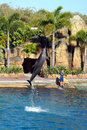 Australia Sea World Dolphin Performer Royalty Free Stock Photography