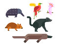 Australia wild animals cartoon popular nature characters flat style and australian mammal aussie native forest