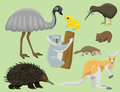Australia wild animals cartoon popular nature characters flat style mammal collection vector illustration.