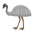Australia wild ostrich animal cartoon character flat style bird emu forest vector illustration.