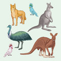 Australian animals isolated wild and birds Royalty Free Stock Photo