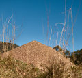 Australian bull ant nest with blue sky horizon Royalty Free Stock Images