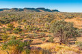 Australian bush northern territory red centre Stock Photography