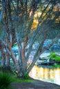 Australian Bush Sunset Royalty Free Stock Photo